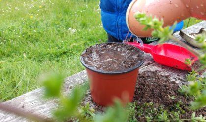 animation du jeudi – jardinage